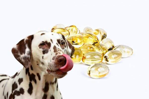 What to Know about Dog Oil Supplements?